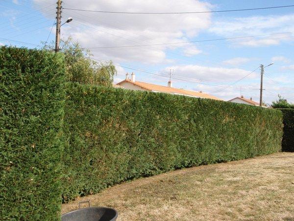 Alliance paysage entretien jardin particuliers vendee for Entretien jardin 13
